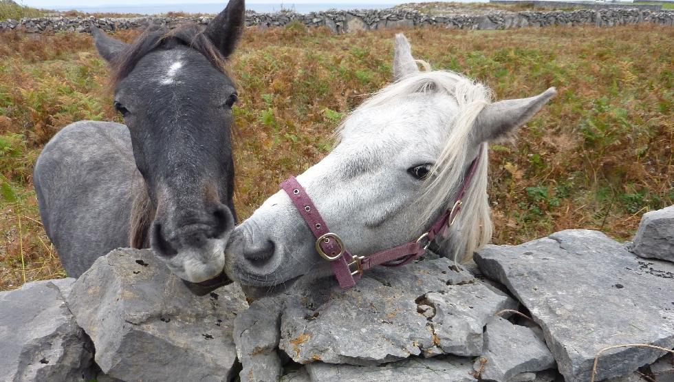 Doolin - Do - Aran - Horses