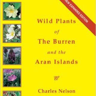 Burren Wildlife