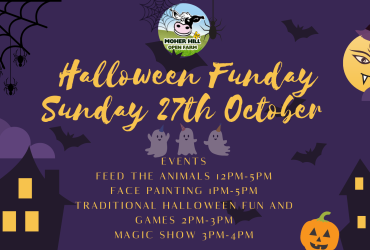 Halloween at Moher Hill Open Farm